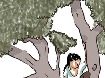 L'autunno degli ulivi